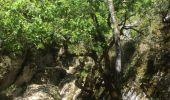 Trail Walk SAINT-PAUL-LE-JEUNE - 07 Résurgence de cotepatiere ( cocalhere) 17-04-18 - Photo 5