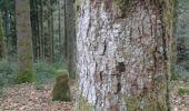 Trail Walk SAINT-AME - entre Duché de Lorraine et Abbaye du St Mont - Photo 4