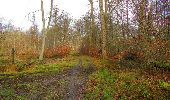 Trail Walk SAINT-JEAN-AUX-BOIS - en forêt de Compiègne_11_la landeblin_les Petits Monts - Photo 82