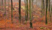 Trail Walk SAINT-JEAN-AUX-BOIS - en forêt de Compiègne_11_la landeblin_les Petits Monts - Photo 52
