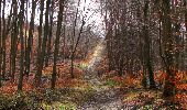 Trail Walk SAINT-JEAN-AUX-BOIS - en forêt de Compiègne_11_la landeblin_les Petits Monts - Photo 80