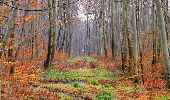 Trail Walk SAINT-JEAN-AUX-BOIS - en forêt de Compiègne_11_la landeblin_les Petits Monts - Photo 40