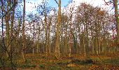 Trail Walk SAINT-JEAN-AUX-BOIS - en forêt de Compiègne_11_la landeblin_les Petits Monts - Photo 89