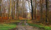 Trail Walk SAINT-JEAN-AUX-BOIS - en forêt de Compiègne_11_la landeblin_les Petits Monts - Photo 9
