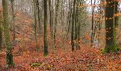 Trail Walk SAINT-JEAN-AUX-BOIS - en forêt de Compiègne_11_la landeblin_les Petits Monts - Photo 51