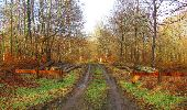 Trail Walk SAINT-JEAN-AUX-BOIS - en forêt de Compiègne_11_la landeblin_les Petits Monts - Photo 13