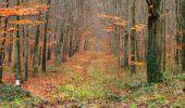 Trail Walk SAINT-JEAN-AUX-BOIS - en forêt de Compiègne_11_la landeblin_les Petits Monts - Photo 32