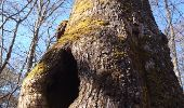 Trail Walk FONTAINEBLEAU - SVG 180321 - Photo 7