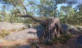 Trail Walk FONTAINEBLEAU - SVG 180321 - Photo 4