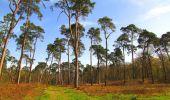Randonnée Marche SAINT-JEAN-AUX-BOIS - en forêt de Compiègne_12_le Grand Octogone - Photo 47