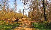 Randonnée Marche SAINT-JEAN-AUX-BOIS - en forêt de Compiègne_12_le Grand Octogone - Photo 78