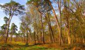 Randonnée Marche SAINT-JEAN-AUX-BOIS - en forêt de Compiègne_12_le Grand Octogone - Photo 52