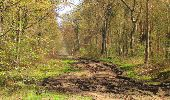 Randonnée Marche SAINT-JEAN-AUX-BOIS - en forêt de Compiègne_12_le Grand Octogone - Photo 66