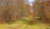 Randonnée Marche SAINT-JEAN-AUX-BOIS - en forêt de Compiègne_12_le Grand Octogone - Photo 93