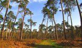 Randonnée Marche SAINT-JEAN-AUX-BOIS - en forêt de Compiègne_12_le Grand Octogone - Photo 49