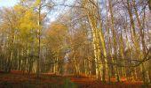 Randonnée Marche SAINT-JEAN-AUX-BOIS - en forêt de Compiègne_12_le Grand Octogone - Photo 27