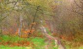 Randonnée Marche SAINT-JEAN-AUX-BOIS - en forêt de Compiègne_12_le Grand Octogone - Photo 1