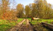 Randonnée Marche SAINT-JEAN-AUX-BOIS - en forêt de Compiègne_12_le Grand Octogone - Photo 140