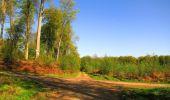 Trail Walk DAMPLEUX - en forêt de Retz_80_sur la Route Tortue et la Route Droite - Photo 104