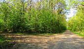 Trail Walk DAMPLEUX - en forêt de Retz_80_sur la Route Tortue et la Route Droite - Photo 268