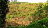 Trail Walk DAMPLEUX - en forêt de Retz_80_sur la Route Tortue et la Route Droite - Photo 256