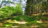 Trail Walk DAMPLEUX - en forêt de Retz_80_sur la Route Tortue et la Route Droite - Photo 26