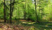 Trail Walk DAMPLEUX - en forêt de Retz_80_sur la Route Tortue et la Route Droite - Photo 24