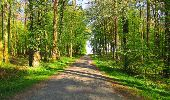 Trail Walk DAMPLEUX - en forêt de Retz_80_sur la Route Tortue et la Route Droite - Photo 243