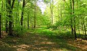 Trail Walk DAMPLEUX - en forêt de Retz_80_sur la Route Tortue et la Route Droite - Photo 25