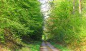 Trail Walk DAMPLEUX - en forêt de Retz_80_sur la Route Tortue et la Route Droite - Photo 107
