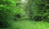 Randonnée Marche LACROIX-SAINT-OUEN - en forêt de Compiègne_35_la Croix Saint-Sauveur_le Ru du Goderu - Photo 15
