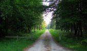 Randonnée Marche LACROIX-SAINT-OUEN - en forêt de Compiegne_16_Boquet Gras_Béthisy_Prés du Rosoir - Photo 125