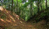 Randonnée Marche LACROIX-SAINT-OUEN - en forêt de Compiegne_16_Boquet Gras_Béthisy_Prés du Rosoir - Photo 95