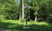 Randonnée Marche LACROIX-SAINT-OUEN - en forêt de Compiegne_16_Boquet Gras_Béthisy_Prés du Rosoir - Photo 59