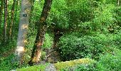Randonnée Marche LACROIX-SAINT-OUEN - en forêt de Compiegne_16_Boquet Gras_Béthisy_Prés du Rosoir - Photo 117