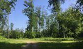 Randonnée Marche LACROIX-SAINT-OUEN - en forêt de Compiegne_16_Boquet Gras_Béthisy_Prés du Rosoir - Photo 78