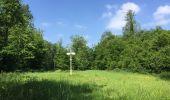 Randonnée Marche LACROIX-SAINT-OUEN - en forêt de Compiegne_16_Boquet Gras_Béthisy_Prés du Rosoir - Photo 46