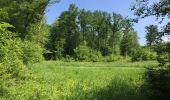 Randonnée Marche LACROIX-SAINT-OUEN - en forêt de Compiegne_16_Boquet Gras_Béthisy_Prés du Rosoir - Photo 33