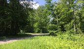Randonnée Marche LACROIX-SAINT-OUEN - en forêt de Compiegne_16_Boquet Gras_Béthisy_Prés du Rosoir - Photo 22