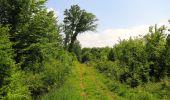 Randonnée Marche LACROIX-SAINT-OUEN - en forêt de Compiegne_16_Boquet Gras_Béthisy_Prés du Rosoir - Photo 26