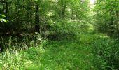 Randonnée Marche LACROIX-SAINT-OUEN - en forêt de Compiegne_16_Boquet Gras_Béthisy_Prés du Rosoir - Photo 15