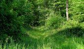 Randonnée Marche LACROIX-SAINT-OUEN - en forêt de Compiegne_16_Boquet Gras_Béthisy_Prés du Rosoir - Photo 43