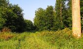 Randonnée Marche LACROIX-SAINT-OUEN - en forêt de Compiegne_16_Boquet Gras_Béthisy_Prés du Rosoir - Photo 122