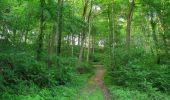 Randonnée Marche LACROIX-SAINT-OUEN - en forêt de Compiegne_16_Boquet Gras_Béthisy_Prés du Rosoir - Photo 105