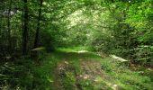 Randonnée Marche LACROIX-SAINT-OUEN - en forêt de Compiegne_16_Boquet Gras_Béthisy_Prés du Rosoir - Photo 38