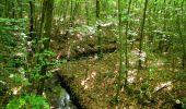 Randonnée Marche LACROIX-SAINT-OUEN - en forêt de Compiegne_16_Boquet Gras_Béthisy_Prés du Rosoir - Photo 39
