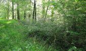Randonnée Marche LACROIX-SAINT-OUEN - en forêt de Compiegne_16_Boquet Gras_Béthisy_Prés du Rosoir - Photo 70