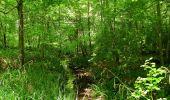 Randonnée Marche LACROIX-SAINT-OUEN - en forêt de Compiegne_16_Boquet Gras_Béthisy_Prés du Rosoir - Photo 16