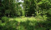 Randonnée Marche LACROIX-SAINT-OUEN - en forêt de Compiegne_16_Boquet Gras_Béthisy_Prés du Rosoir - Photo 49