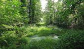 Randonnée Marche LACROIX-SAINT-OUEN - en forêt de Compiegne_16_Boquet Gras_Béthisy_Prés du Rosoir - Photo 74